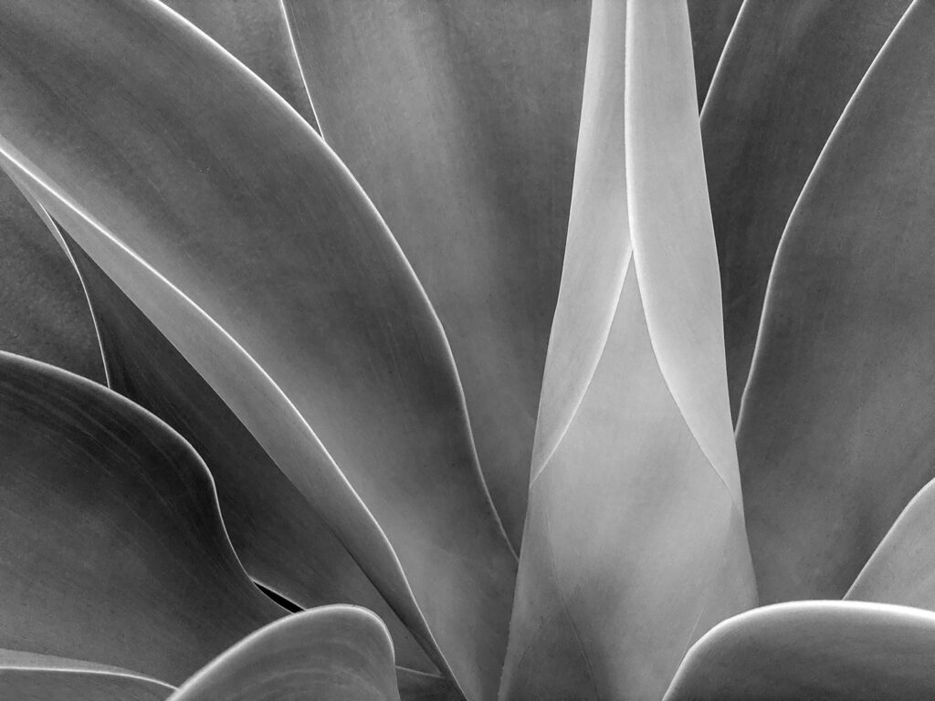 Eastside Agave