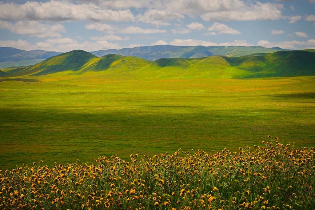 Spring, Carrizo Plain, CA(2)
