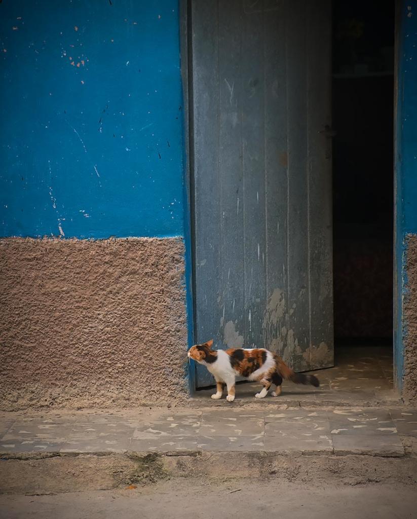 Curious Kitty, Trinidad, Cuba.