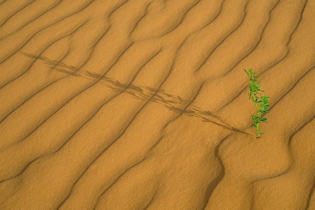 Dunes, Southern Utah