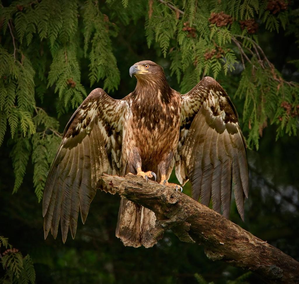 Eagle, BC, Canada