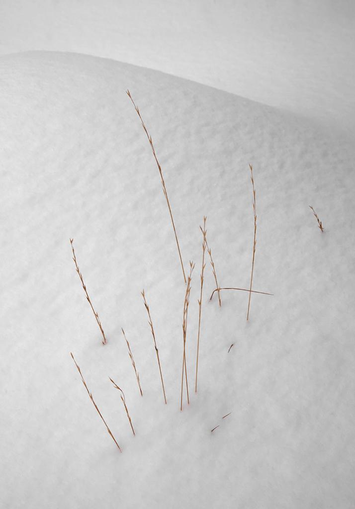 Morning Snow Surprise, Sierra Nevada, CA