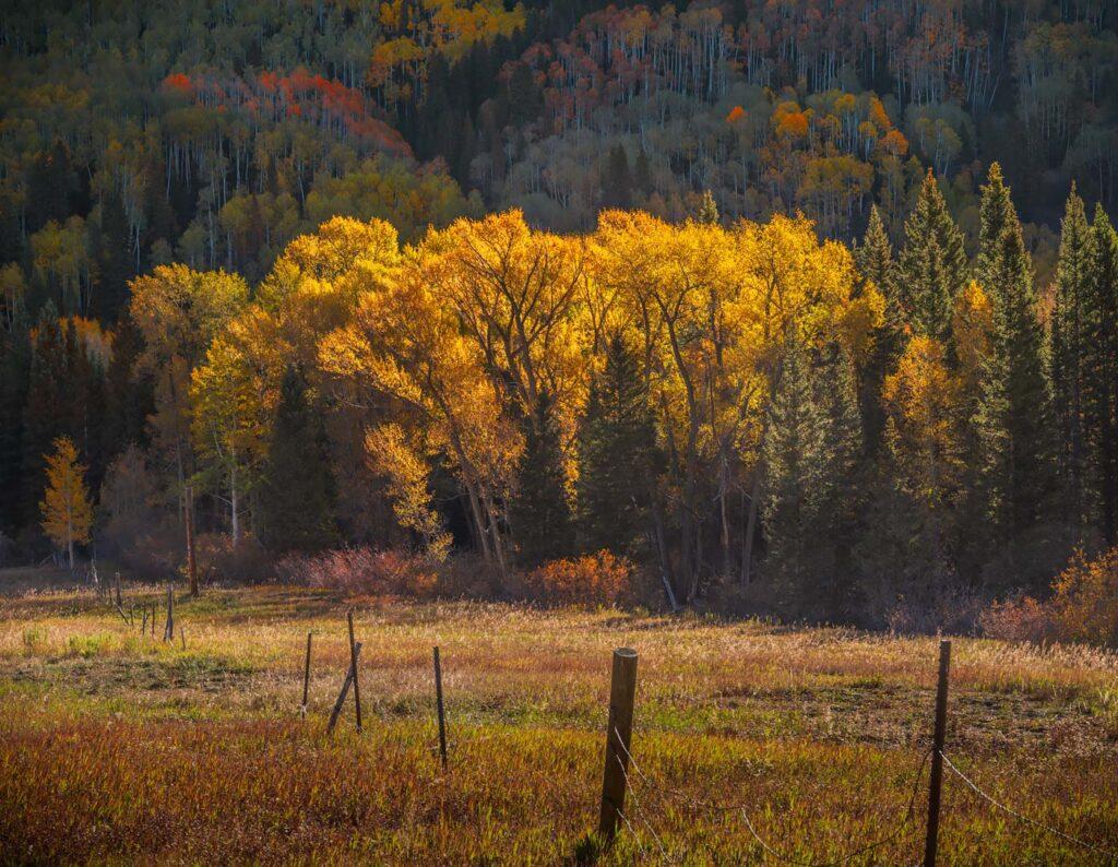 Fall near Ridgeway, Colorado
