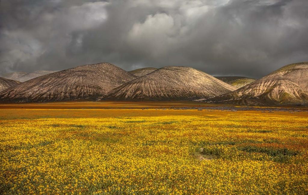 Elkhorn Hills, Carrizo Plain, CA